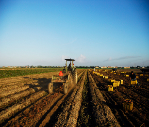 tractor pics