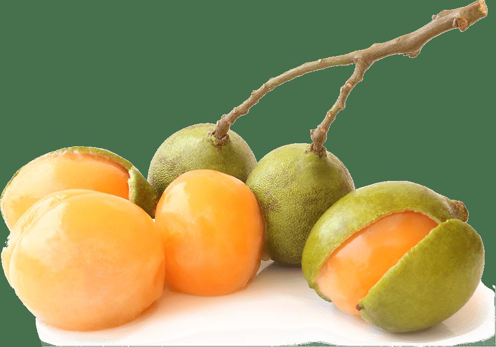 Tropical spanish lime o mamoncillo